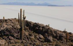 Isla del Pescado in Bolivia fotografia stock