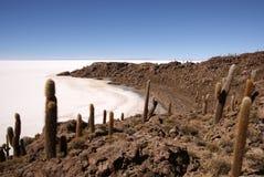 Isla del Pescado, Salar de Uyuni, Боливия Стоковые Изображения