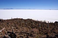 Isla del Pescado, Salar DE Uyuni, Bolivië Royalty-vrije Stock Foto