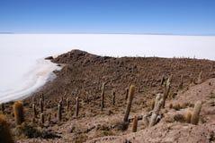 Isla del Pescado, Salar DE Uyuni, Bolivië Stock Foto's