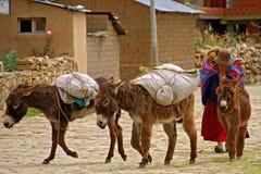 Isla del Sol La Bolivia nel Sudamerica Fotografia Stock