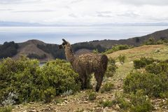 Isla del Sol op meer Titicaca in Bolivië Royalty-vrije Stock Afbeeldingen