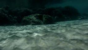 Isla desierta, ambiente incontaminado subacuático, maravilla de la naturaleza