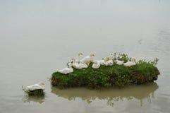 Isla Ducky Fotos de archivo libres de regalías