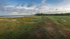 Isla el Brasil de Marajo Fotos de archivo