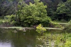 Isla en el lago en día lluvioso fotos de archivo