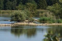 Isla en un lago con el cormorán negro y la garza gris [Ardea cinerea] Fotos de archivo