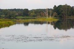 Isla en un lago con la hierba y un árbol que crece en él Foto de archivo