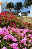 Isla floral Lanzarote imagen de archivo