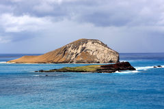 Isla Hawaii del conejo Imágenes de archivo libres de regalías