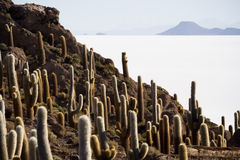 Isla Incahuasi, Bolivia Royalty Free Stock Photos