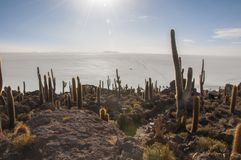 Isla Incahuasi or Incahuasi island. Isla Incahuasi or Inka Wasi, is an oasis in the middle of the Salar de Uyuni in Bolivia. This island is formed of coevals and Stock Image
