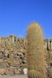 Isla Incahuasi lub kaktus wyspa zdjęcia royalty free