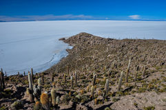 Isla Incahuasi (Pescadores), Salar de Uyuni, Βολιβία Στοκ Εικόνα