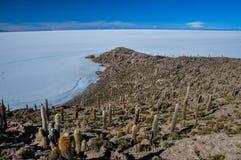 Isla Incahuasi (Pescadores), Salar de Uyuni, Bolivie Image stock