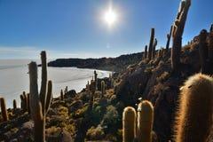 Isla Incahuasi Salar de Uyuni Département de Potosà bolivia Photographie stock