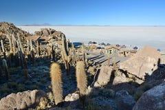 Isla Incahuasi Salar de Uyuni Dipartimento di Potosà bolivia Fotografia Stock Libera da Diritti