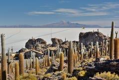 Isla Incahuasi Salar de Uyuni Dipartimento di Potosà bolivia Fotografia Stock