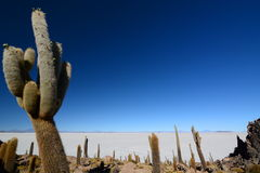Isla Incahuasi. Salar de Uyuni. Potosí Department. Bolivia. Isla Incahuasi is a hilly and rocky outcrop of land and former island in Bolivia situated in the Stock Image