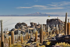 Isla Incahuasi. Salar de Uyuni. Potosí Department. Bolivia. Isla Incahuasi is a hilly and rocky outcrop of land and former island in Bolivia situated in the Stock Photography