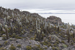 Isla Incahuasi (Pescadores), Salar de Uyuni, Bolivia Stock Photo