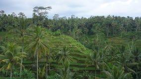 Isla Indonesia de Bali Foto de archivo libre de regalías