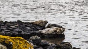 Isla Irlanda del Norte de Rathlin Fotos de archivo libres de regalías