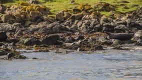 Isla Irlanda del Norte de Rathlin Imágenes de archivo libres de regalías