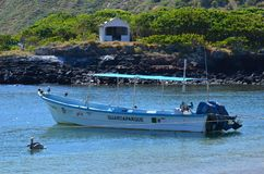 Isla Isabel que uma ilha vulcânica 15 milhas fora de Mexico's Riviera Nayarit costeia Imagem de Stock