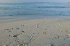 Isla maldiva Fotos de archivo libres de regalías