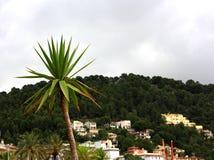 Isla mediterránea admitida fotografía Córcega imagen de archivo libre de regalías