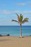 Isla mediterránea admitida fotografía Córcega Foto de archivo libre de regalías