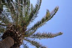 Isla mediterránea admitida fotografía Córcega Imagen de archivo