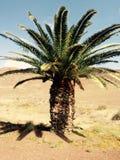 Isla mediterránea admitida fotografía Córcega Fotos de archivo