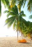 热带海滩isla mujeres北部的棕榈树 免版税图库摄影