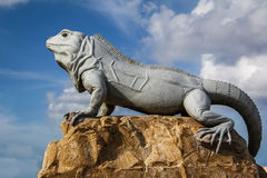 Isla Mujeres Iguana Royalty Free Stock Photos