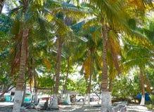 Isla Mujeres island Caribbean beach Mexico. Isla Mujeres island Caribbean beach of Riviera Maya in Mexico Royalty Free Stock Image
