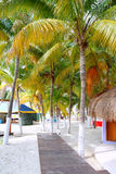 Isla Mujeres tropical North Beach. Palm trees palapas in Mexico Cancun Stock Photography