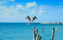 Isla Mujeres-vogels van het eiland de Caraïbische strand stock foto's