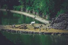 Isla para los pájaros Imagenes de archivo