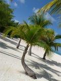 Isla Pasion - Cozumel - México imagens de stock royalty free