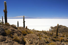 Isla Pescado nel mezzo di Salar de Uyuni immagini stock libere da diritti