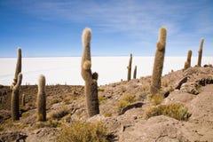 Isla Pescador, Bolivië Stock Foto