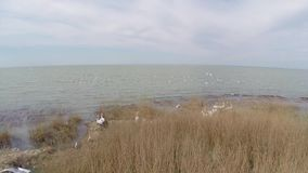 Isla que recibe a las colonias de pelícanos dálmatas, visión aérea