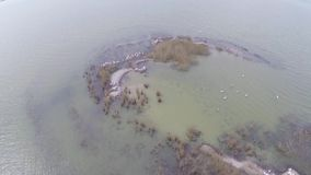 Isla que recibe a las colonias de pelícanos dálmatas, visión aérea almacen de metraje de vídeo