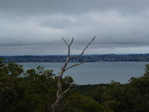 Isla Rangitoto Fotografía de archivo