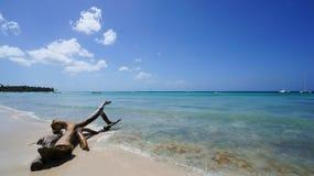 Isla Saona海滩与死的树的在前景 免版税图库摄影