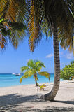 Isla Saona Royalty Free Stock Photography