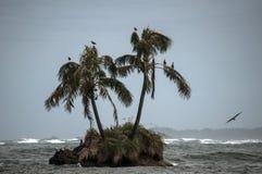Isla tropical Fotografía de archivo libre de regalías