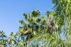 Isla tropical con las palmeras Fotografía de archivo